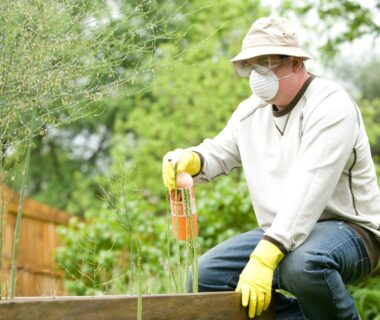 Why You Should Hire a Pest Control Team